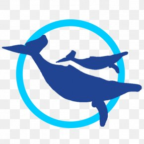 Whale Watch Cabo Dolphin Whale Watching Web Browser Clip Art PNG