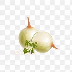 Quasiphysical Vegetables - Vegetable Euclidean Vector Fruit Clip Art PNG
