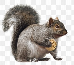 Squirrel - Fox Squirrel Rodent Christmas PNG