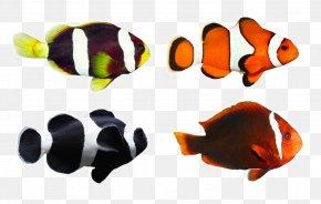 Tropical Fish - Clownfish Tropical Fish Coral Reef Fish PNG