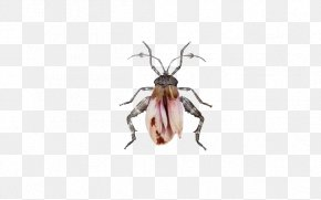 Insect - Insect Hymenopterans Heteroptera Homoptera Art PNG