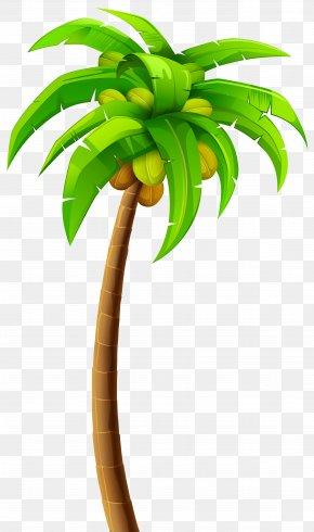 Palm Tree - Tree Arecaceae Clip Art PNG
