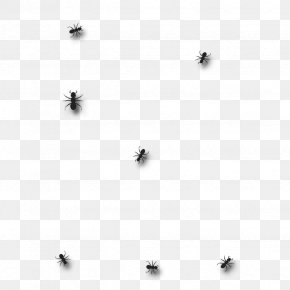 Ants - Insect Black And White Monochrome Photography Invertebrate PNG