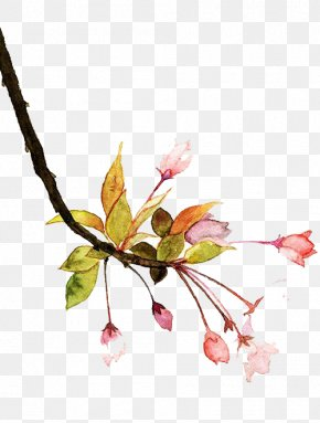 Watercolor Flowers - Watercolor Painting Bilibili Le.com Baidu Tieba PNG