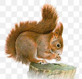 Bu - Eastern Gray Squirrel Basabizitza Animal Clip Art PNG