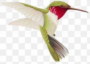 Transparent Bird Cliparts - Hummingbird Drawing Clip Art PNG