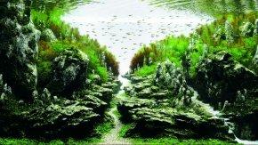 Aquarium - ADA Malaysia Aquascaping Aquatic Plants Aquarium Competition PNG