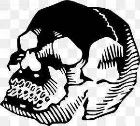 Skull - Jaw Human Behavior Line Art Animal Clip Art PNG