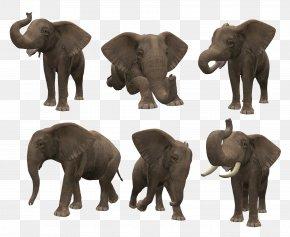 Elephant - Elephant Computer File PNG