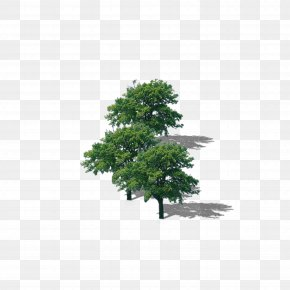 Tree Tree Lush Tree Top - Branch Top Tree Download PNG