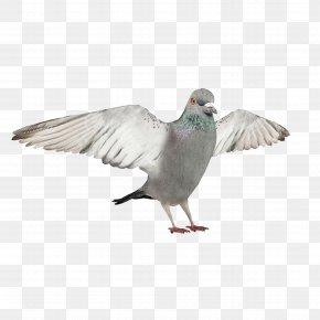 Pigeons,wing - Bird 3D Modeling Autodesk 3ds Max Wavefront .obj File 3D Computer Graphics PNG