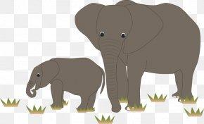 African Elephant - Indian Elephant African Elephant Wildlife Curtiss C-46 Commando PNG