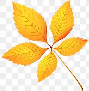 Leaf - Leaf Autumn Leaves Clip Art PNG