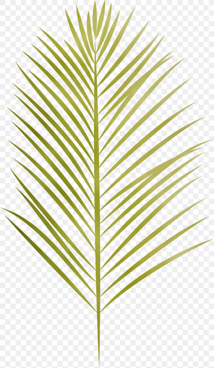 Leaf Plant Stem Grasses Angle Line, PNG, 1749x3000px, Arabian Landscape, Angle, Biology, Grasses, Leaf Download Free
