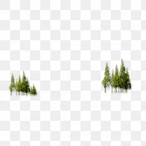 Forest - Forest Tree PNG