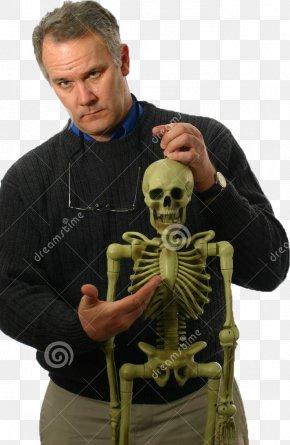 Skeleton - Stock Photography Human Skeleton Bone Anatomy PNG