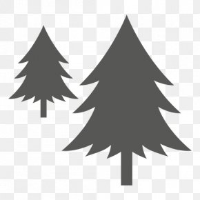 Fir-tree - Pine Tree PNG