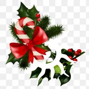 SHIVA - Candy Cane Mistletoe Christmas Phoradendron Tomentosum Clip Art PNG