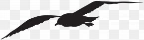 Seagull Silhouette Clip Art Image - Download Clip Art PNG