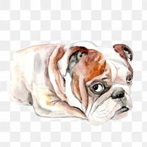 Shar Pei - Toy Bulldog Olde English Bulldogge Valley Bulldog Old English Bulldog Shar Pei PNG