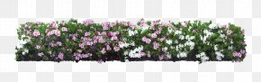 White Flower Garden - Shrub Flower Plant Tree PNG