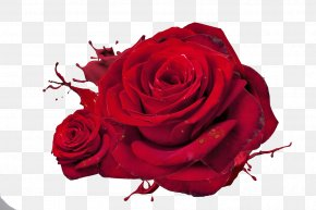 Rose - Rose Love Red High-definition Television Wallpaper PNG