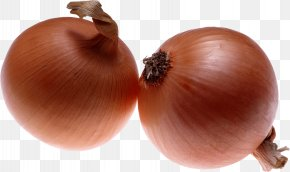Onion Image Download Picture - Dosa Onion PNG
