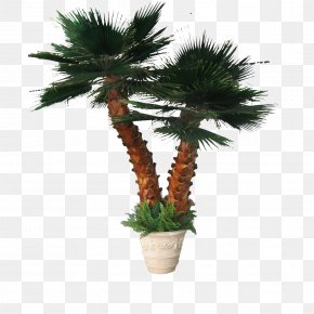 Palm Tree - Arecaceae Tree Leaf Date Palm PNG