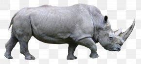 Rhino - Western Black Rhinoceros Rhinoceros 3D PNG