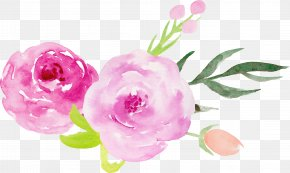 Hand-painted Watercolor Roses Decorative Elements - Wedding Invitation Centifolia Roses Garden Roses Pink Flower PNG