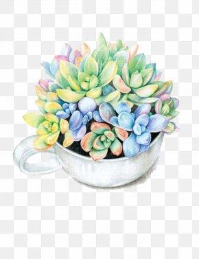 Fleshy Bouquet - Paper Colored Pencil Succulent Plant Watercolor Painting Drawing PNG