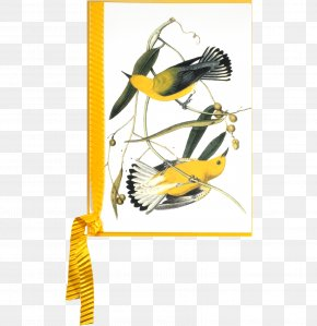 Bird - The Birds Of America New World Warbler National Audubon Society Audubon Bird Prints: A Portfolio Of 6 Self-Matted Full Color Prints PNG