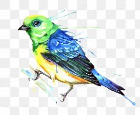 Bird - Bird Watercolor Painting Photography Illustration PNG