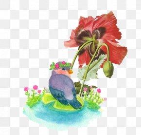 Watercolor Painting Birds - Common Poppy Opium Poppy Papaver Orientale Botanical Illustration PNG