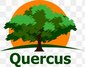 Quercus - Clip Art Green Leaf Logo Periodic Table PNG