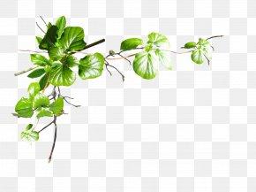 Parsley - Leaf Tree Plant Stem Flower PNG