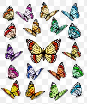 Creative Butterfly - Royalty-free Euclidean Vector Stock Photography Illustration PNG