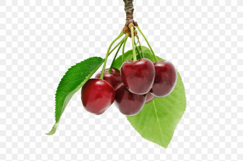 Cherry Fruit Download Berry, PNG, 1000x664px, Cherry, Auglis, Berry, Food, Fruit  Download Free