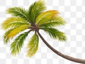 Coconut Tree Decoration - Coconut Tree Arecaceae PNG