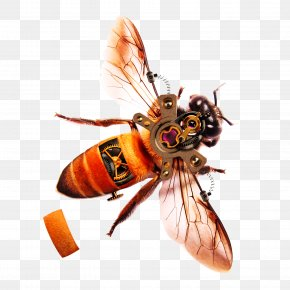 Bee - Honey Bee Tutorial Software PNG