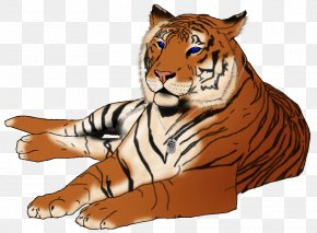 Tiger - Tiger Lion Whiskers Illustration Clip Art PNG