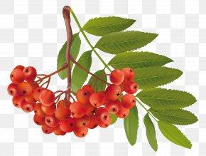 Autumn Plant Clipart Image - Autumn Clip Art PNG