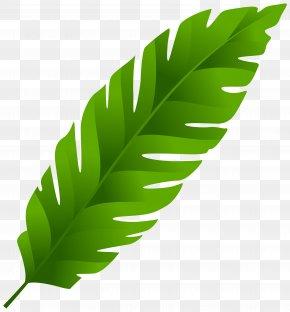 Leaf Clip Art - Leaf Arecaceae Clip Art PNG