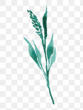 Drawing Plant - Plant Drawing PNG