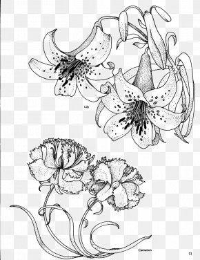 Lily Flowers Line Drawing - Carnation Birth Flower Drawing Coloring Book PNG