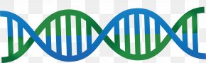 Blue And Green Cute DNA Vector Double Helix Graphics - DNA Nucleic Acid Double Helix Euclidean Vector PNG