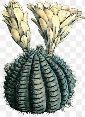 Perennial Plant Flower - Cartoon Tree PNG