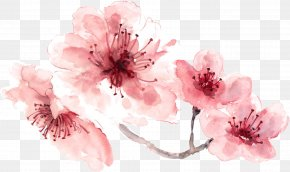 Cherry Blossom - Cherry Blossom Watercolor Painting PNG