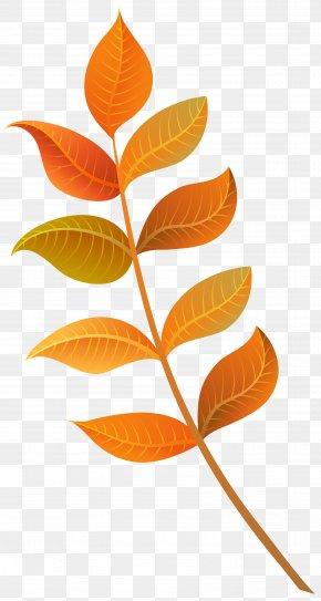 Fall Decorative Leaves Clipart Image - Autumn Leaf Color Autumn Leaf Color Clip Art PNG