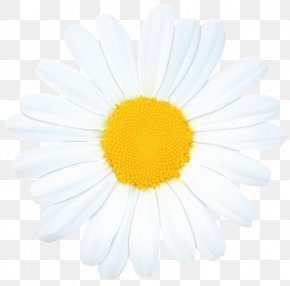Chamomile - Common Daisy Royalty-free Clip Art PNG